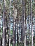 Standplatz der Bäume Stockfotos