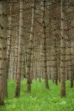 Standplatz der Bäume Lizenzfreies Stockbild