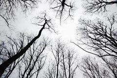 Standplatz der blattlosen Bäume im silhoutte Lizenzfreie Stockbilder