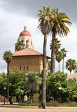 Stanford campus. A lonely student works with his laptop under the palm tree Royalty Free Stock Photos