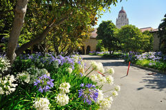 Stanford University Campus in Palo Alto. Flowers and the Hoover Tower in Stanford University Campus , Palo Alto, California Stock Photography