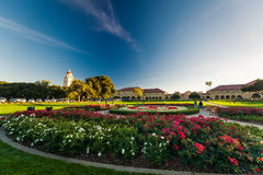 Stanford University and park Stock Photography