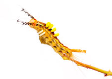Stange caterpillar Stock Images