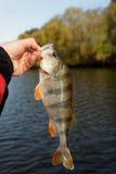 Stange in der Hand des Fischers Lizenzfreie Stockbilder