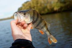 Stange in der Hand des Fischers Stockbilder