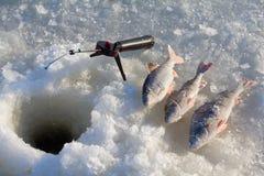 Stange, die 6 fischt Lizenzfreie Stockfotografie