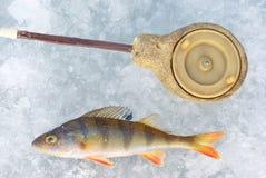Stangefische mit Gestänge Stockbild