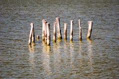 Stangen in der Lagune Stockfotografie