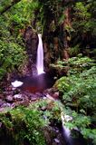 Stanley Force Gill Royalty Free Stock Photography
