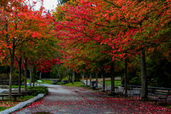 Stanley Park in the fall. Stock Photography