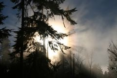 Stanley park and fog 2. Sun shine through trees and fog in Vancouver's Stanley Park Royalty Free Stock Photography