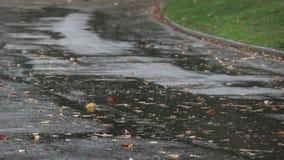 Stanley Park Rain, Vancouver 4K UHD banque de vidéos