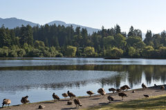 Stanley park Vancouver Canada Royalty Free Stock Photos