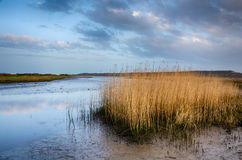 Stanpit Marsh Royalty Free Stock Images