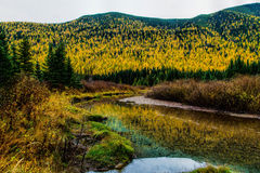 Stanton Creek Autumn Colors Stock Photo