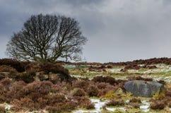 Stanton Moor stock fotografie