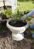 stanu gdzie ma wbić roślin. Zdjęcia Royalty Free