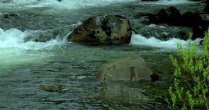 Stany Zjednoczone, Alaska, Ketchikan miasteczko, kałamarnica kapitał, mały strumień zdjęcie wideo