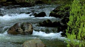 Stany Zjednoczone, Alaska, Ketchikan miasteczko, kałamarnica kapitał, mały strumień zbiory