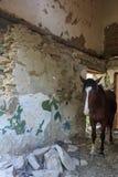 Stanza abbandonata cavallo Fotografia Stock