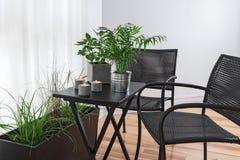 Stanza con i lotti delle piante verdi Fotografie Stock