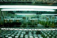 Stanza dell'incubatrice della pianta Immagine Stock Libera da Diritti