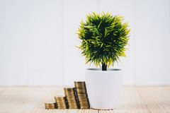Stap van muntstukkenstapels en weinig boom in vaas, bedrijfs planning Royalty-vrije Stock Foto's