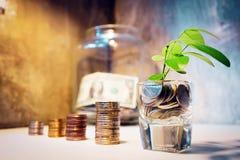 Stap van muntstukkenstapels met boom het groeien op bovenkant en blokhuis m stock foto
