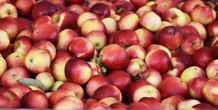 Stapel av äpplen Royaltyfria Foton