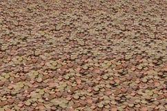 Stapel av pengar Royaltyfri Foto