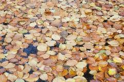 Stapel av torkade leaves i ett damm Arkivbilder