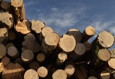 Stapel Bauholz gegen einen blauen Himmel Lizenzfreie Stockbilder