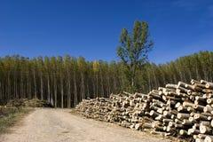Stapel der Bäume und des Waldes Lizenzfreies Stockbild