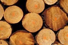 Stapel der Bauholzprotokolle vom Protokollieren lizenzfreie stockfotografie