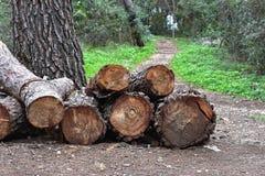Stapel der gefällten Eiche meldet den Wald an Stockbilder