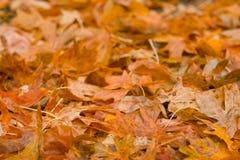 Stapel der Herbst-Blätter Lizenzfreies Stockbild