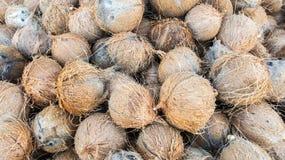 Stapel der jungen trockenen Kokosnuss-Coir-Hülsen Lizenzfreies Stockbild