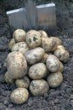 Stapel der Kartoffel und der Schaufel. Lizenzfreie Stockfotografie