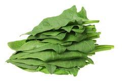 Stapel der Spinat-Blätter Stockfoto