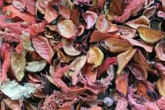 Stapel der trockenen Blätter Lizenzfreies Stockbild
