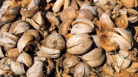 Stapel der trockenen Kokosnuss-Coir-Hülsen in Sunny Day Lizenzfreie Stockfotografie