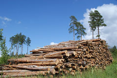 Stapel des Bauholzes protokolliert Sommer-Landschaft Lizenzfreie Stockfotografie