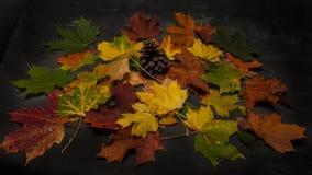 Stapel des bunten Herbstlaubs Stockbild