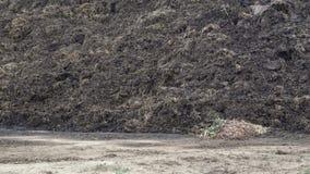 Stapel des Düngemittels in der Landschaft Haufen des Mists auf dem Gebiet auf dem Bauernhof Düngemittel vom Kuhdüngemittel und -s stock video
