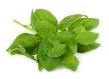 Stapel des frischen grünen Basilikums Stockfotografie