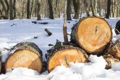 Stapel des gefällten Holzes meldet Schnee im Winterwald an Lizenzfreie Stockfotos