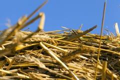 Stapel des gelben trockenen Strohs Lizenzfreie Stockfotos
