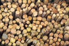 Stapel des geschnittenen Baumholzes Stockbild