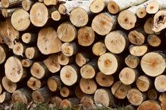 Stapel des geschnittenen Baums zeichnet hölzernen Beschaffenheitshintergrund auf Baumstämme Brennholzstapel für den Hintergrund stockfoto