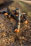 Stapel des hölzernen Holzes der Klotz Stockfotografie